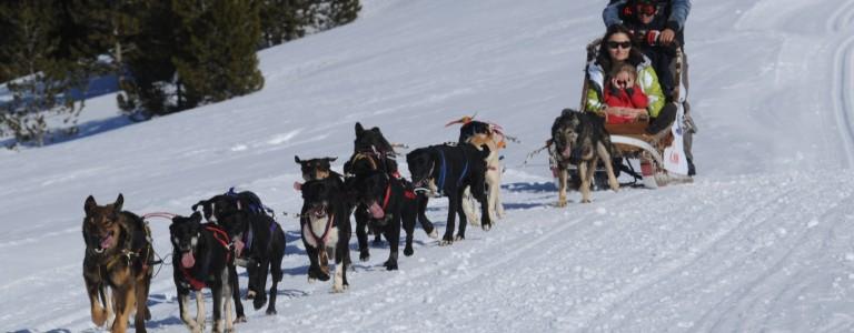 Paseo con trineo de perros